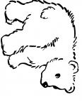 ours de la montagne