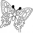 papillon à l'arrêt