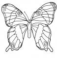 papillon avec des ailes magnifiques