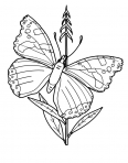 papillon sur une plante
