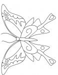papillon très calme