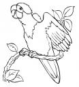 perroquet qui pousse un cris