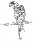 perroquet sous le soleil