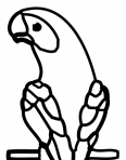 perroquet vu de dos