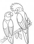 perroquets avec une crête