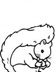 petit bébé écureuil