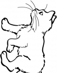 petit chaton qui marche