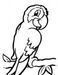 petit perroquet avec un regard malicieux