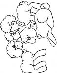 petits bébé agneaux