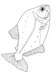 poisson de mer immobile