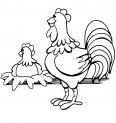 poule et son petit nid