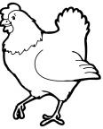 poule qui court
