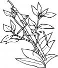 sauterelle cachée dans les feuilles