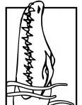 tête de crocodile
