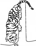 tigre regarde une coccinelle