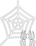 toile d'araignées
