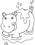un hippopotame qui prend sa douche