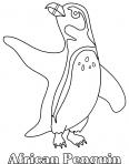 un pingouin fait le beau