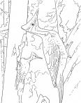 un pivert sur un tronc d'arbre