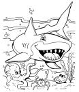 un requin et ses amis