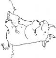un rhinocéros qui réfléchit