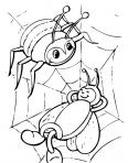 une araignée et une abeille