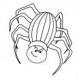 une araignée pas contente