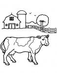 vache à la ferme des animaux